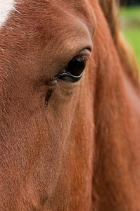 horse-crying-199x300